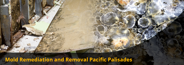 Mold Remediation and Removal Pacific Palisades CA